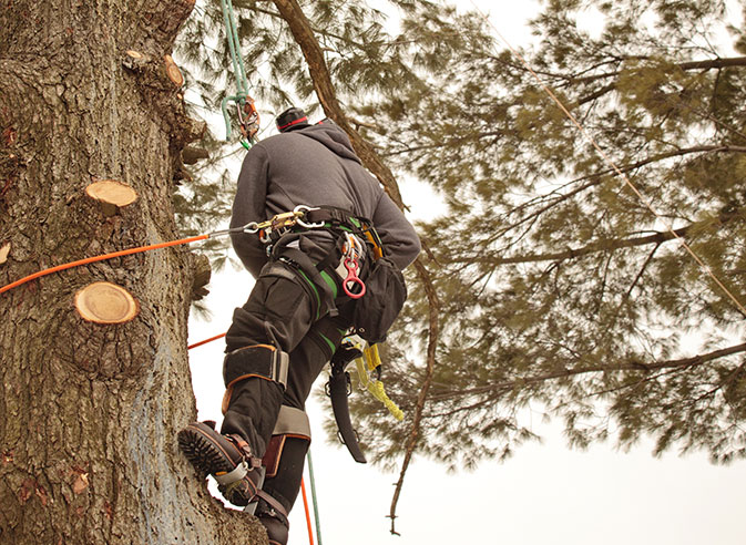 Bowyer's Tree Service employee trimming a tree