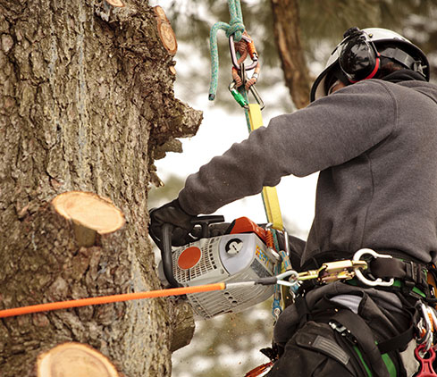 Bowyer's Tree Service employee cutting a tree down